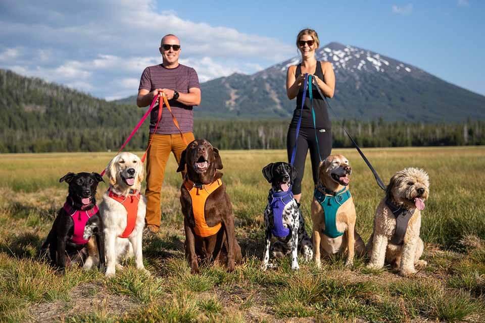 哪一款狗背帶適合我家狗狗?2021 狗狗背帶挑選秘笈看這裡!