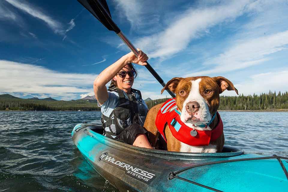 狗狗救生衣哪裡買?開心玩水又安全的狗狗救生衣推薦