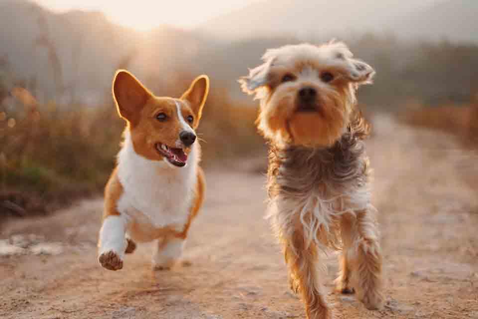 狗狗營養品怎麼挑?推薦你這樣找最安心!