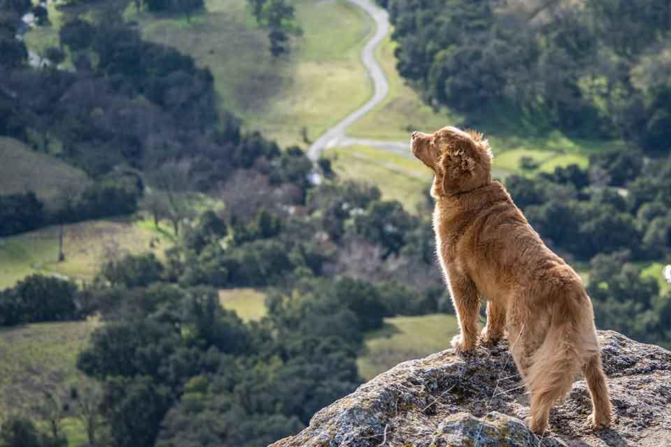優骼服超強版犬用跟驚奇版差在哪?哪款適合我家狗狗?
