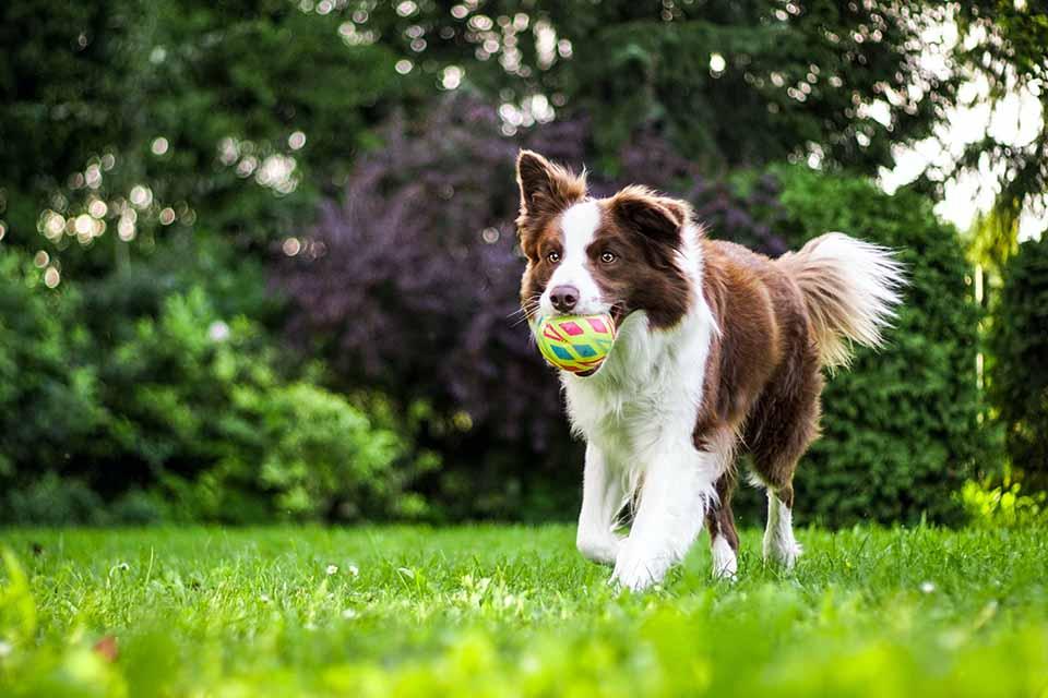 你知道狗狗也需要做關節保健嗎?狗關節保養品選購技巧看這裡!