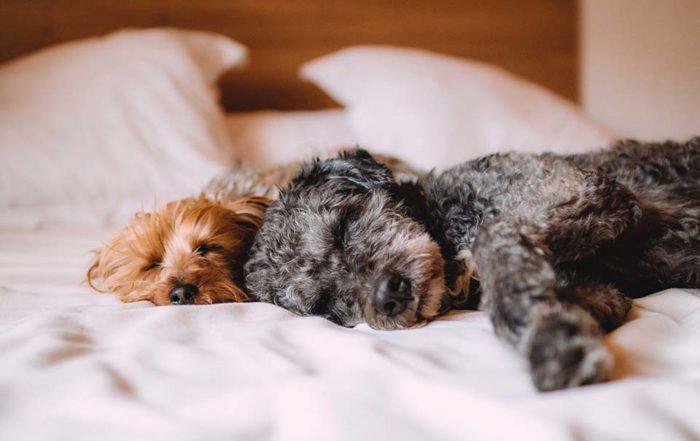 台灣氣候潮濕,許多狗狗容易有皮膚過敏或是黴菌問題,因此造成狗狗一直抓癢。不但抓的皮膚紅紅的,嚴重的話狗狗抓癢甚至會抓到破皮流血。而且皮膚有問題的狗狗也特別容易有異味以及掉毛。那麼,該如何預防以及如何針對敏感性肌膚的狗狗做好狗狗皮膚保養健康管理呢?首先必須先釐清幾個問題。狗狗一直抓癢的原因為何?狗狗一直抓癢的原因為何?狗…