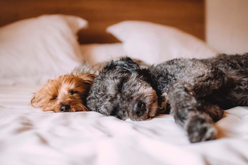 狗狗一直抓癢怎麼辦,狗狗皮膚保養你有做好嗎?