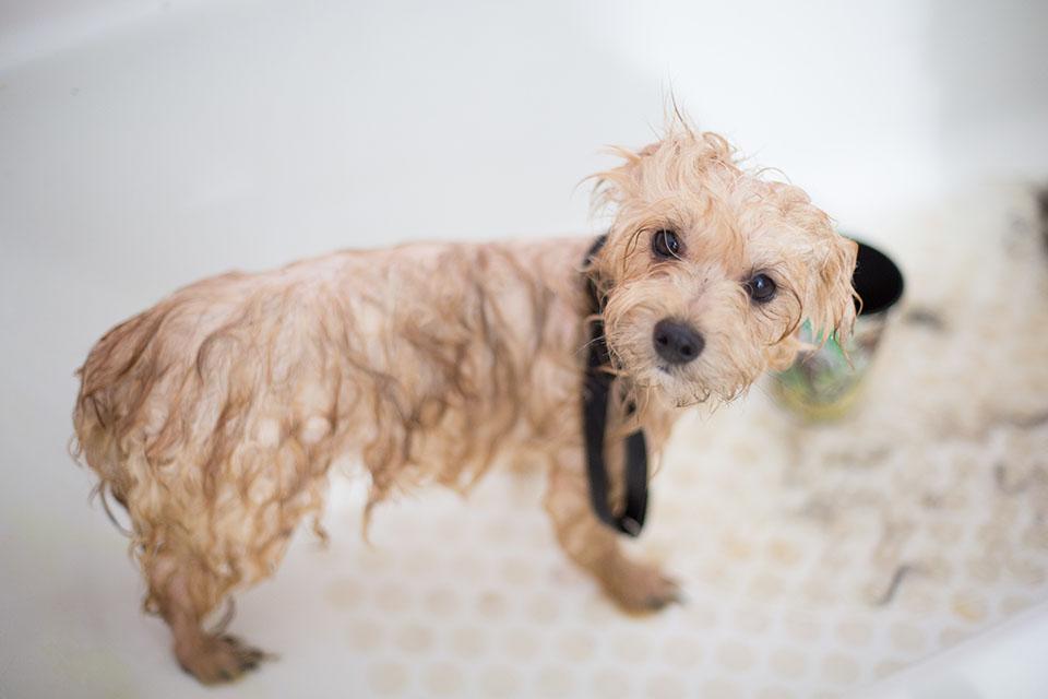 挑對狗狗沐浴乳,讓你的愛犬不再排斥洗澡,狗狗洗澡沐浴乳推薦在這裡!