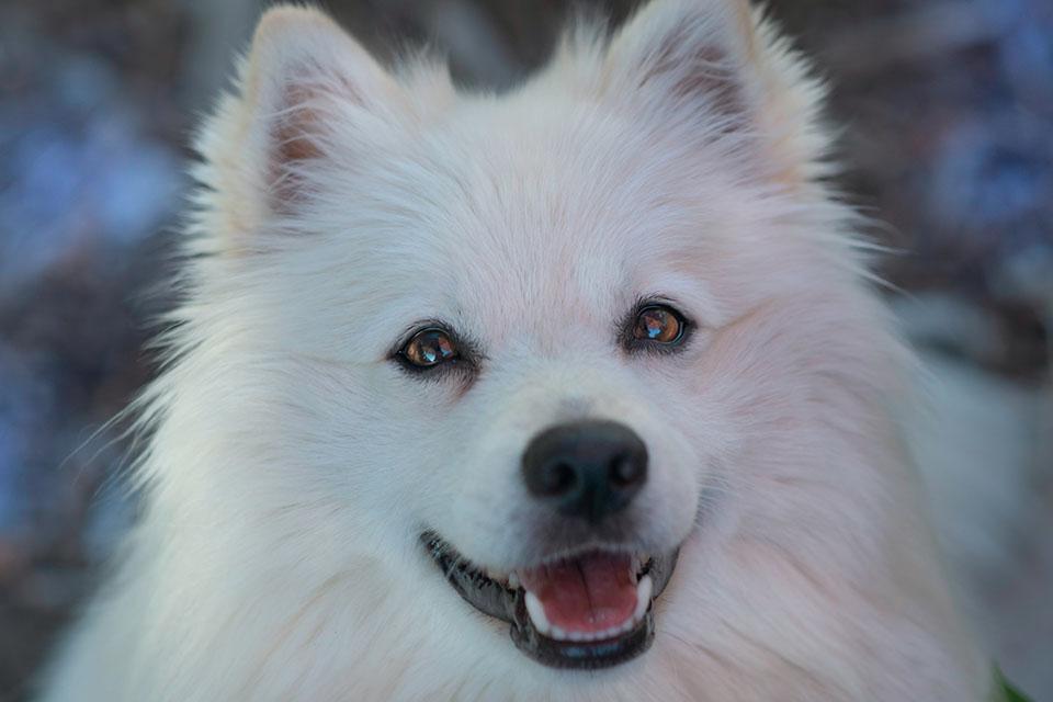 擔心狗狗牙結石找上門?平時就該做好狗狗牙齒保健!