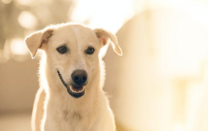有的狗狗會排斥刷牙,但是做好日常口腔保健又是不可或缺的事,若擔心狗狗排斥刷牙,最簡單的方式就是從幼犬時期就培養良好的口腔衛生習慣。如果您的狗狗已經是成犬了,還是有很多方式可以讓牠適應。那麼,該如何挑選狗狗牙刷?狗牙刷推薦產品有哪些?狗狗多久刷一次牙才好?狗狗排斥刷牙,原因出在狗牙刷?當我們第一次把牙刷放在狗狗的口腔裡…