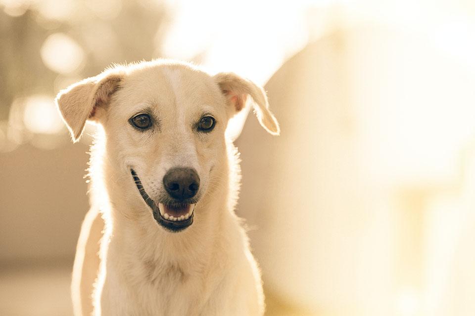 狗狗排斥刷牙?挑對狗狗牙刷讓牠乖乖刷牙不反抗!