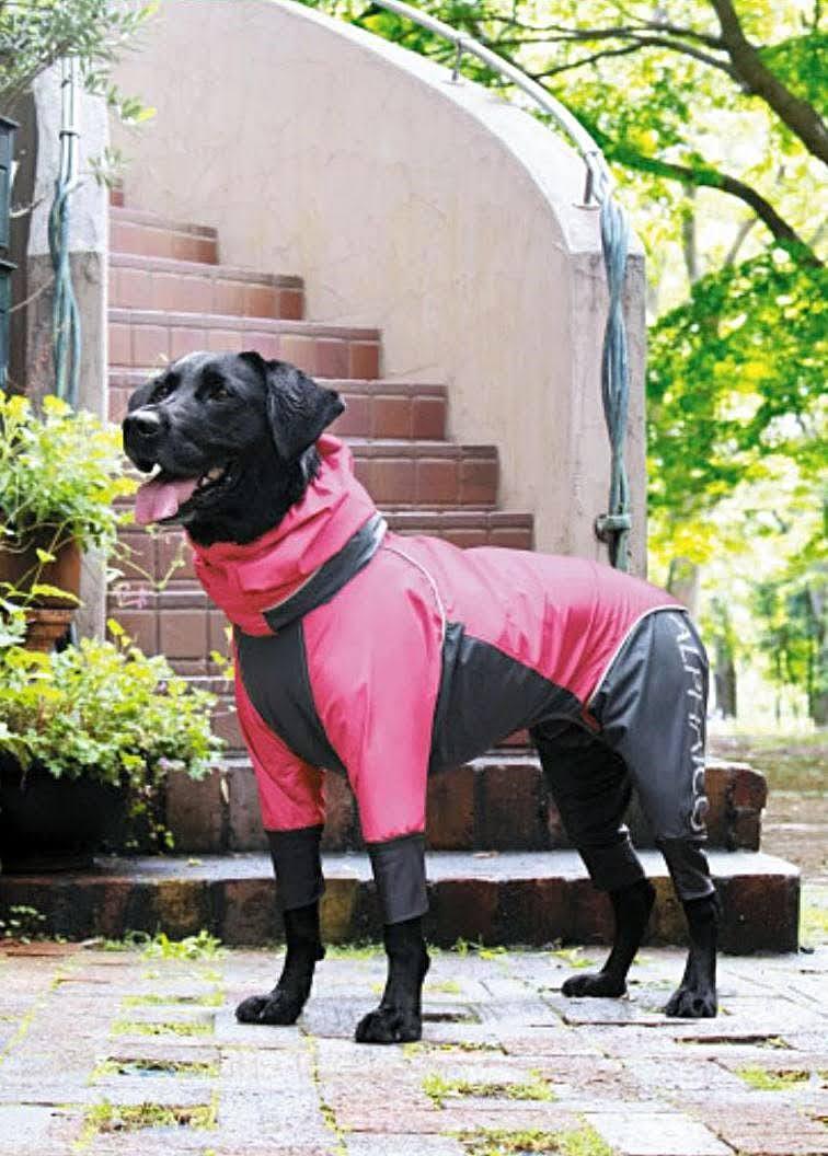 寵物雨衣推薦|穿上寵物雨衣,讓愛犬不再害怕雨季來襲!