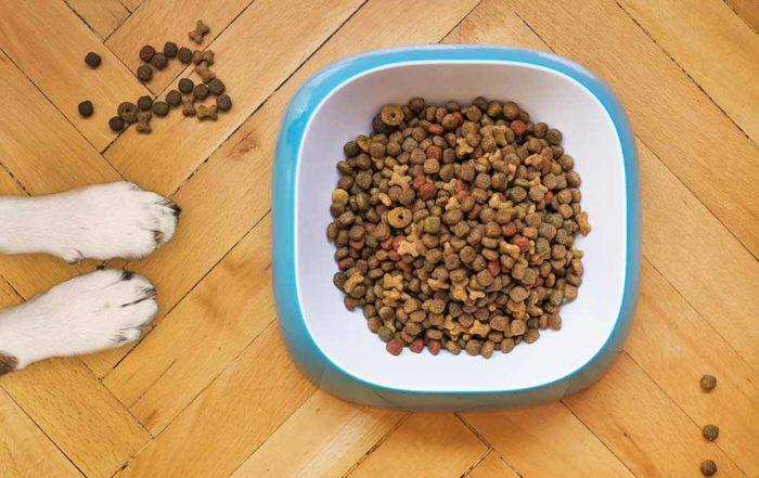 """狗狗不吃飼料,出現挑食現象,是什麼原因導致的?""""這款飼料適口性如何?狗狗會不會不吃?""""大部分客人問這樣的問題,往往是因為家裡都有一隻挑食的狗狗。狗狗不吃飼料怎麼辦?是什麼因素讓狗狗挑食呢?換牙、焦慮、零食吃太多、飼料的味道不夠吸引,以及沒有養成良好的飲食習慣,都有可能造成狗狗不吃飼料的原因。什麼原因導致狗狗不吃飼料?以…"""
