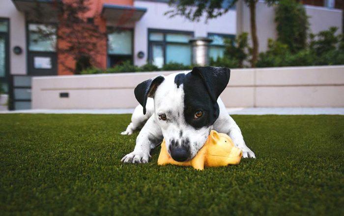 寵物玩具百百種,寵物玩具推薦怎麼挑最好?