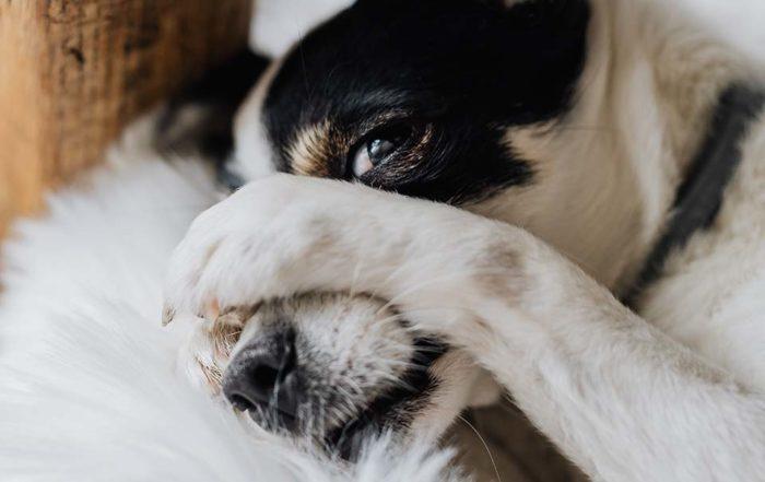 隨著天氣轉暖,您可能會發現狗搔癢的頻率更高,狗皮膚止癢是當務之急。造成狗皮膚癢的原因有很多,其中導致狗皮膚紅癢的兩個主要因素是害蟲和過敏,兩者都可能是季節性的。狗皮膚癢因素-跳蚤和壁蝨一旦發現狗皮膚紅癢,請先檢查跳蚤和壁蝨。這些與血液有關的害蟲一直將狗當作宿主,壁蝨在一段時間內可能不會被注意到,直到它們變得完全腫大並…