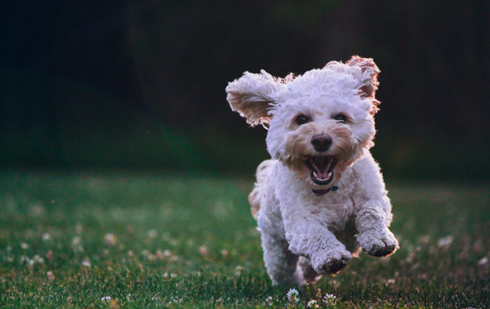 寵物飼料推薦2021版|精選寵物飼料,讓你挑選時不再是個無頭蒼蠅