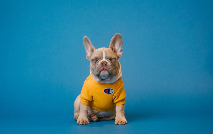 狗狗憂鬱症怎麼辦?常見狗狗憂鬱症症狀有哪些?