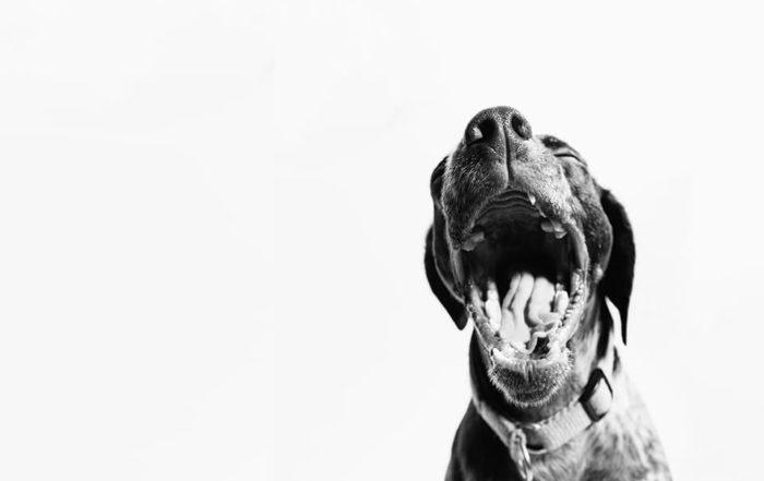 狗狗不吃飯怎麼辦?先了解狗狗不吃飯的原因有哪些再來對症下藥