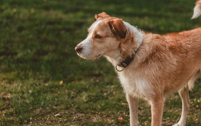 低敏狗飼料推薦|低過敏狗飼料這樣挑,過敏體質也能吃得開心又安心