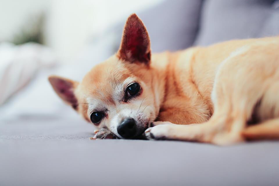 狗狗腸胃不適、吸收不好嗎?教你怎麼挑狗腸胃保健品食品!