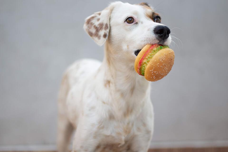 狗狗皮膚病吃什麼食物最安心?改善狗狗皮膚食物、保健食品推薦這些!