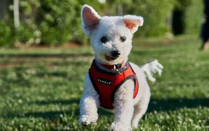狗皮膚黴菌該怎麼處理?想解決狗狗皮膚病黴菌就看這邊