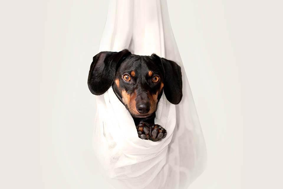 發現狗狗皮屑好多該怎麼辦?狗狗皮屑脫毛你可以這樣做!