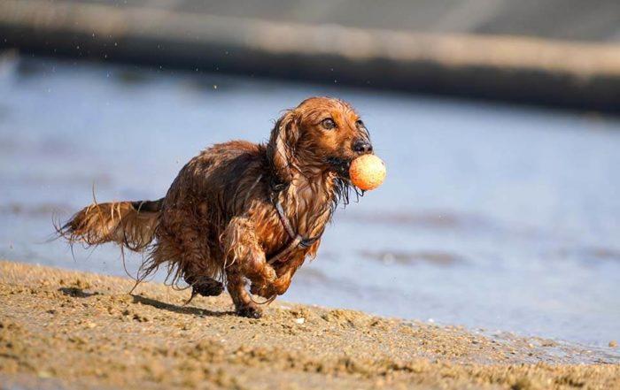 不傷氣管胸背帶好重要!顧及安全之餘也要照護狗狗的氣管!