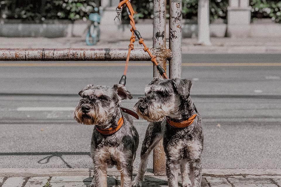 狗狗喘的很厲害是正常的嗎?感覺狗狗喘不過氣,你可以這樣做