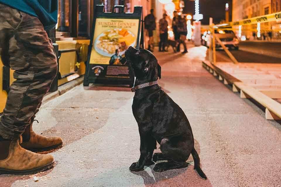 狗狗吃飯太快,應該怎麼做才能讓狗狗正常吃飯?