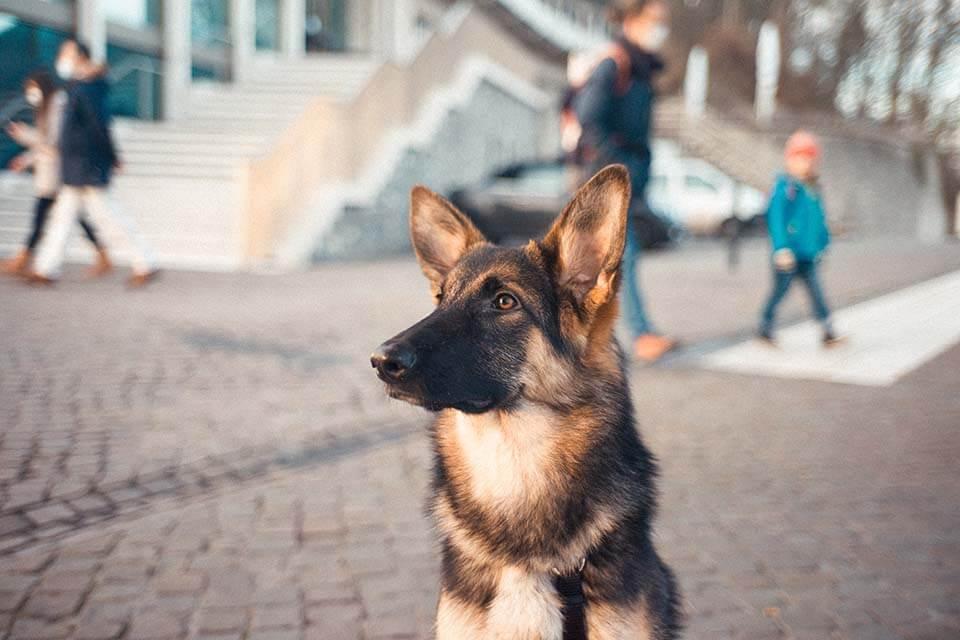 注意!狗狗眼睛發炎多久會好?想好轉就要這樣照顧