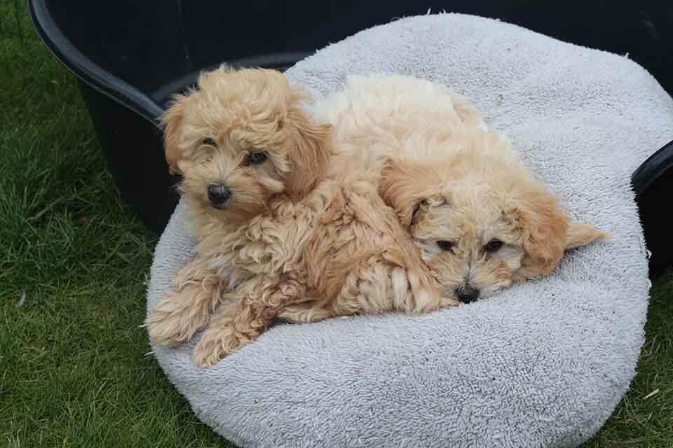兩個月幼犬零食推薦怎麼買?給小狗狗吃零食要這樣挑