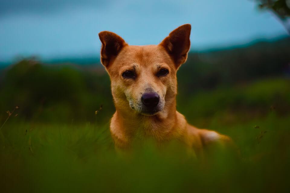 常看到狗狗舔腳嗎?狗一直咬自己的腳,其實有這樣的警訊