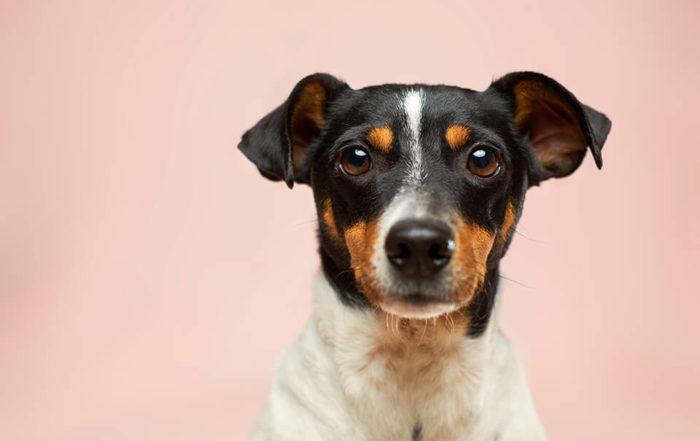 狗狗葉黃素有什麼幫助嗎?狗狗葉黃素推薦哪個品牌?