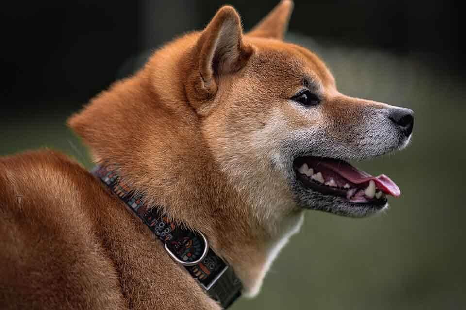 狗狗牙膏應該怎麼挑選?找狗牙膏推薦,就看這篇