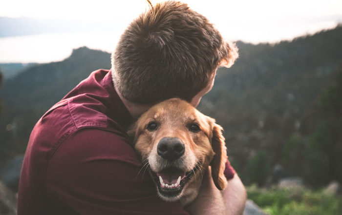 狗狗身上有結痂,是生病了嗎?